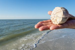 seashells in Sandbridge
